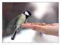 kuş beslenmesi