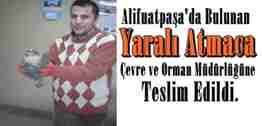 alifuatpaşada bulunan yarali_atmaca_sakarya çevre orman il müdürlüğüne teslim edildi.