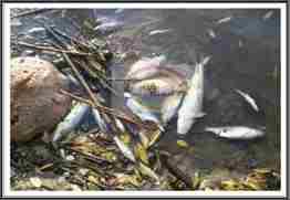 balıkölümleri.2