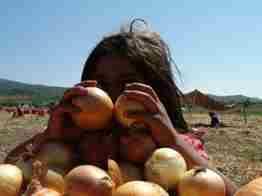 geyve bayat köyü soğan hasadı15
