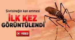 sivrisinegin-damardan-kan-emmesi-ilk-kez-goruntulendid950dfab12e163f7446c
