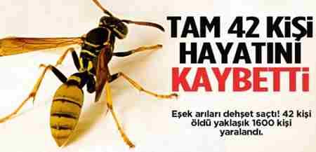 esek_arilari_dehset_sacti_42_olu_1600_yarali13808226130_h1081492