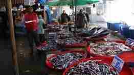 geyve balık pazarı-balıkçı yılmaz (3)