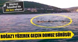 istanbul-bogazi-domuz-ana93