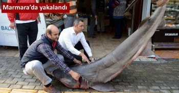 dev köpek balığı marmarada yakalndı