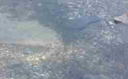geyve karaçay deresi balık  (1)