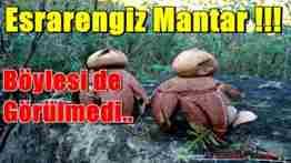 GEYVE BAĞLARBAŞI KÖYÜ ESRARENGİZ MANTAR 1