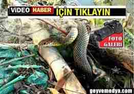 geyve bağlarbaşı köyünde balıkçıların ağına takılan yılan (3)