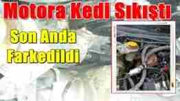 taraklı otomobil motoruna sıkışan kedi kurtarıldı (4)