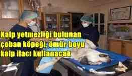 sakarya kalp yetmezliği çeken köpek -geyve
