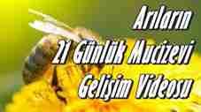 arilarin-bal-seruvenindeki-mucize-74418-460x258