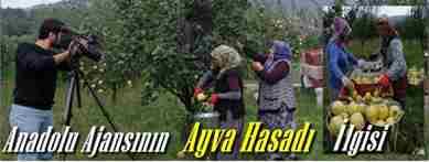 geyve -ayva-hasadi-cekimleri-