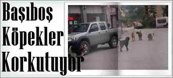 Alifuatpaşa Mahallesinde Köpek Şikayeti