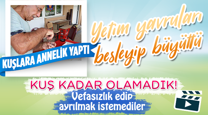 Geyve Boğazköy'de Kuşlara Annelik Yaptı