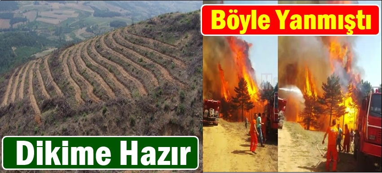 Yangın Yeri Eski Haline Kavuşturulacak.