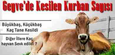 geyve-de-kesilen-kurban-sayisi--crop