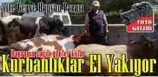 geyve-hayvan-pazari-