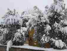 geyve-kar-yagisi-sonrasi-zeytin-ureticilerine-uyari- (3)