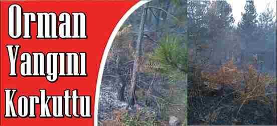 Orman Yangını Korkuttu…