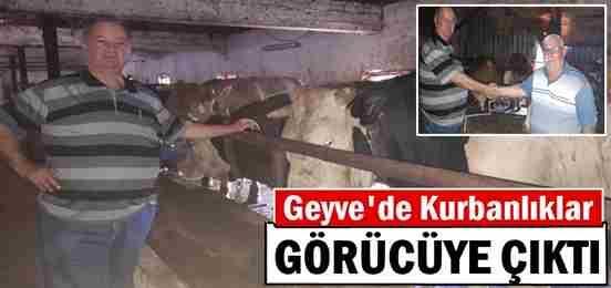 Geyve'de Kurbanlıklar Görücüye Çıktı