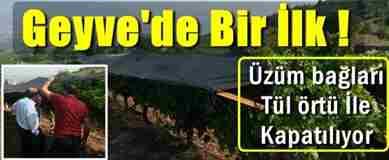 geyve-uzum-baglari-tul-ortu-ile-kapatiliyor--crop