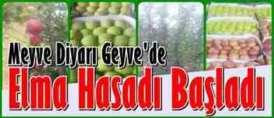 geyvede-elma-hasadi-basladi-