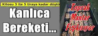 kanlica_bereketi_h7625