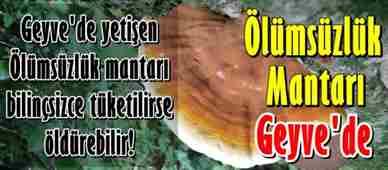olumsuzluk-mantarti-reishi-mantari-geyvede--crop