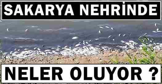 Sakarya Nehrinde Neler Oluyor?